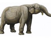 Разходка в миналото – изчезнали бозайници