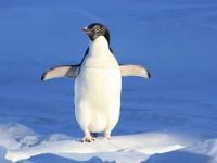 Загадка за Южния полюс