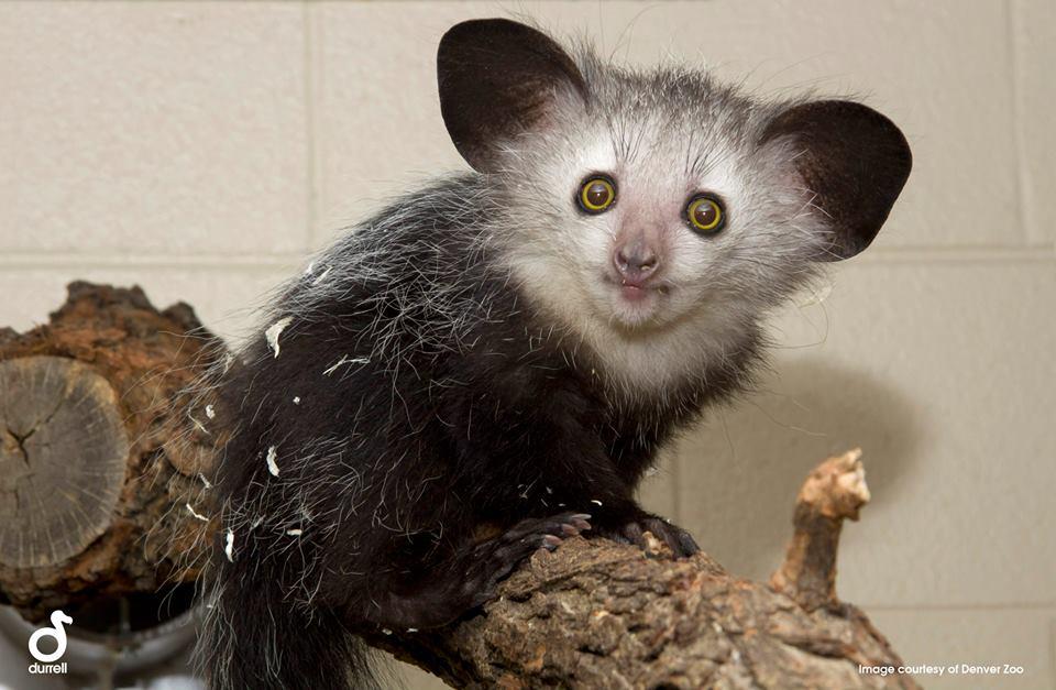 Какво се крие на о.Мадагаскар?
