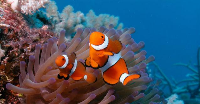 kids-programata-ekspediciya-do-koralovite-rifove