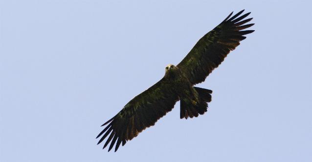 Европейски дни на птиците в Зоологическата градина