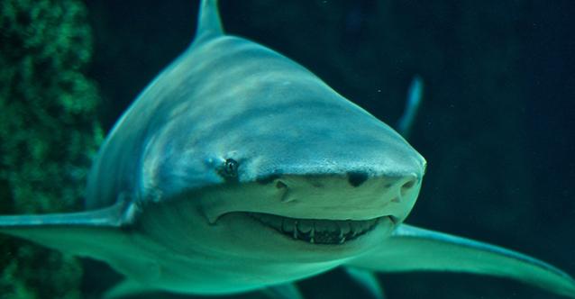 приключение-с-акули_1