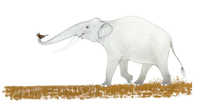 Слонът, пеперудът и други истории