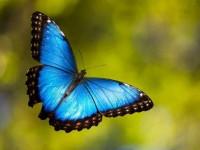 Пеперудите: в света на цветовете и промяната