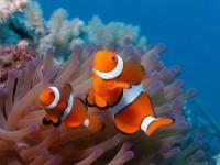 Експедиция до кораловите рифове