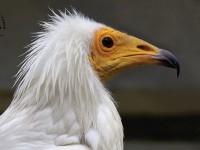 Международен ден на птиците