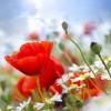 Пролетните цветя