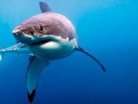 Денят на изследователя на акули