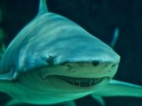 Приключение с акули