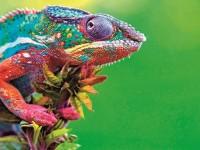 Магията на цветовете
