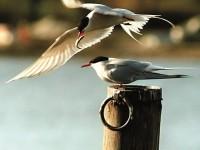 Миграцията на птиците
