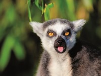 Какво се крие на Мадагаскар