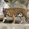 Животните от Азия