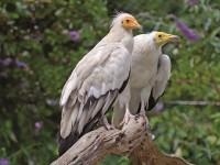 Ден на мигриращите птици