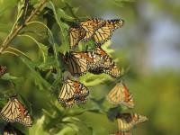 Ателие Пеперудите