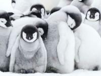 В света на пингвините
