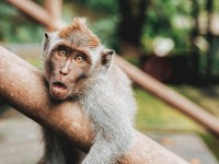 Ателие Маймуни