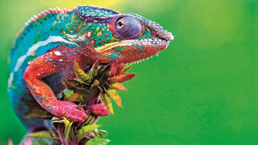 Магията на цветовете (1)