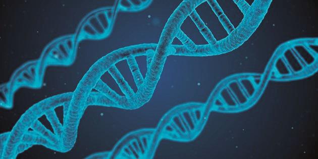ДНК (2)