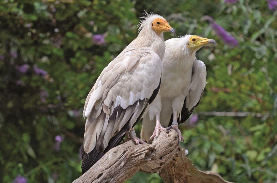 Ден на мигриращите птици (2)
